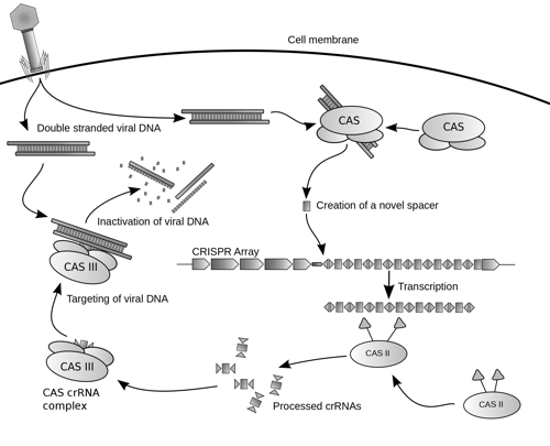 CRISPR:Cas Blog Image