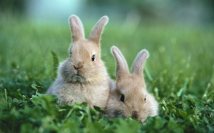 Two baby rabbits, outdoors